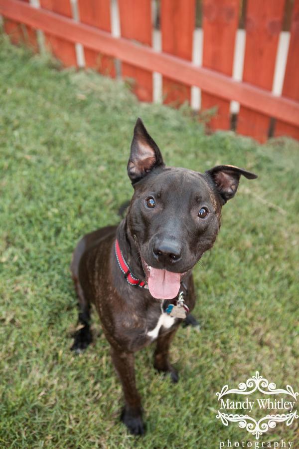 Nashville Dog Photographer Pet Portraits