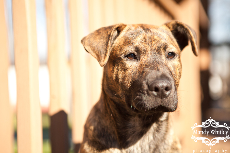 Nashville Dog Photographer Pets for Adoption