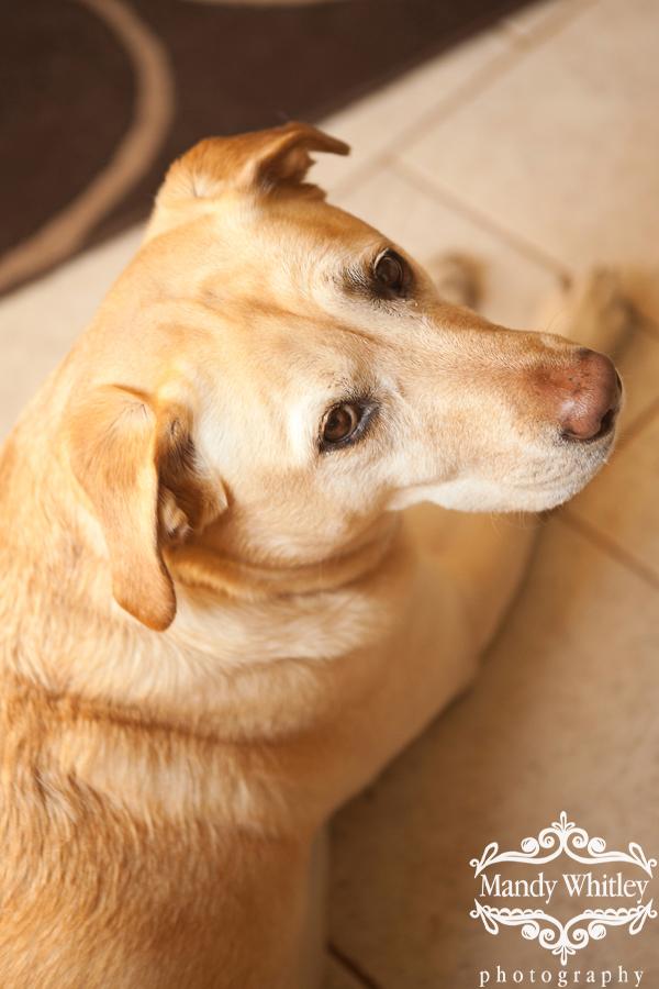 Nashville Dog Photographer Pet Photography