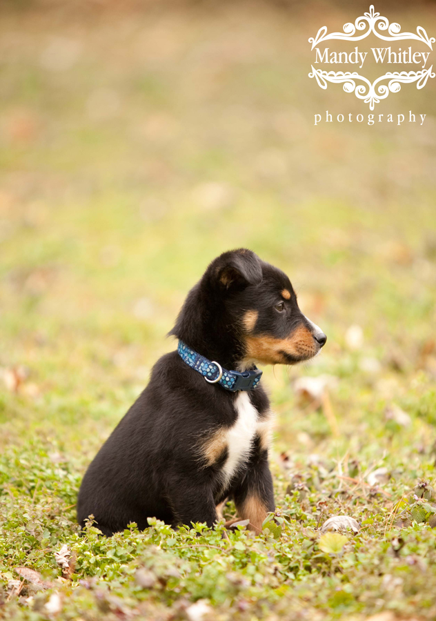 Foster Dog East CAN Nashville Dog Photographer