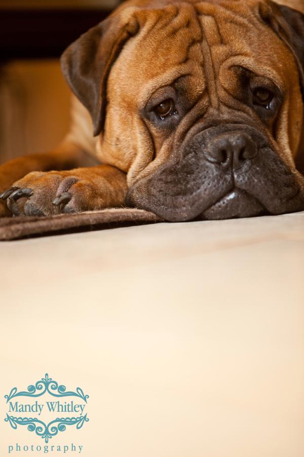 Nashville Dog Photography