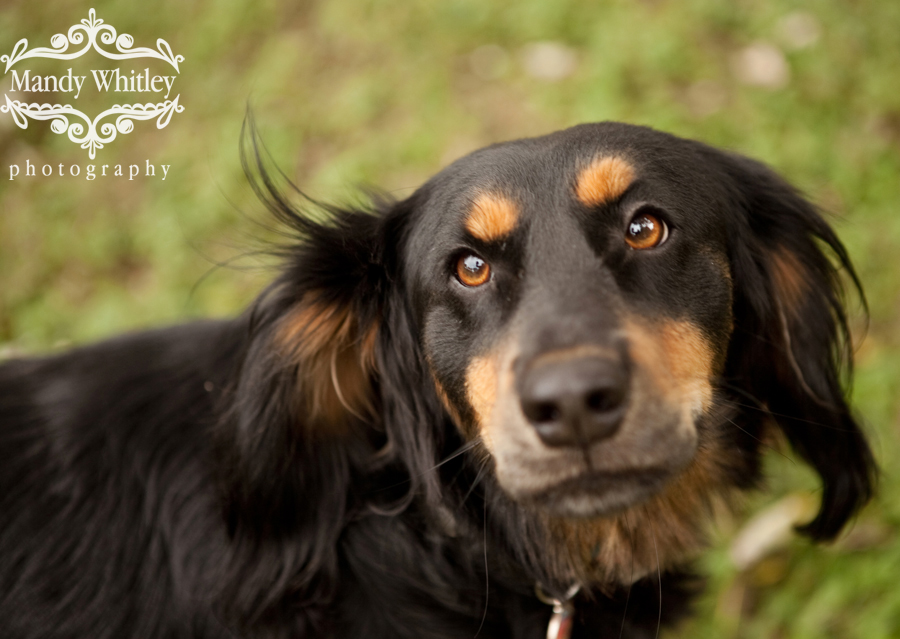 Foster Pets Nashville Pet Photographer