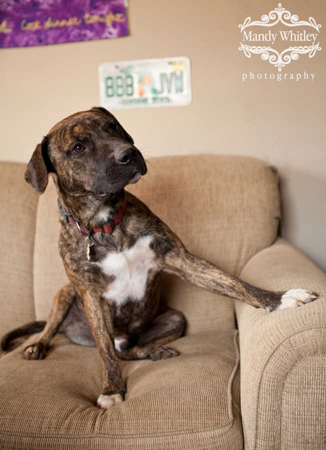 Nashville Dog Photographer Pet Photography Mandy Whitley