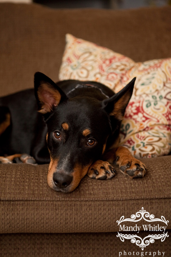 Nashville Dog Photographer