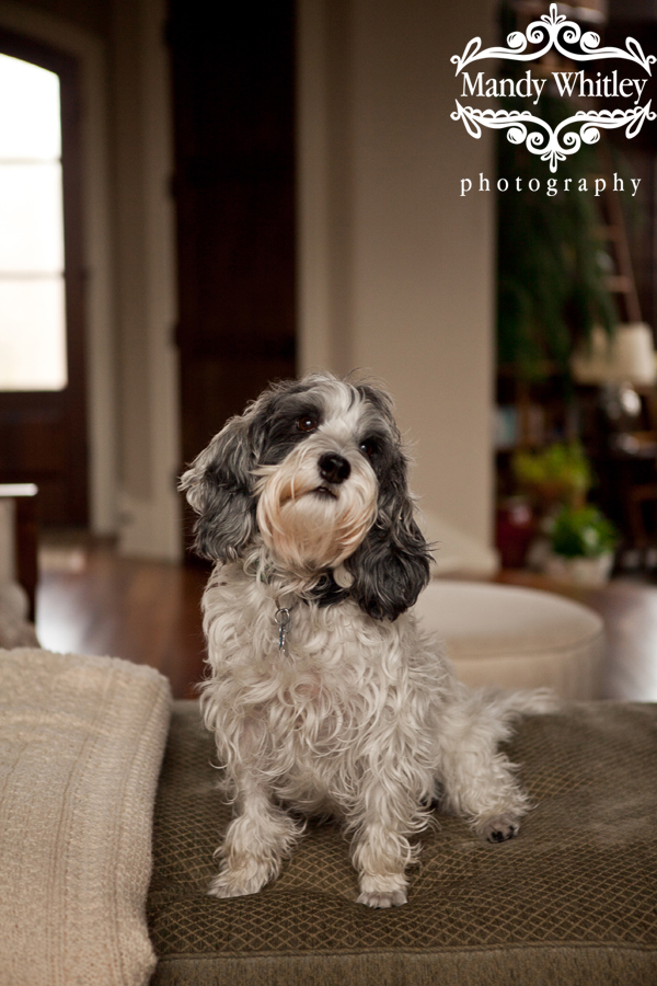 best dog photographer in nashville tn