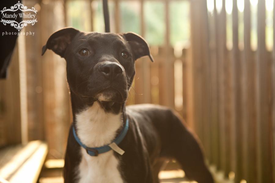Nashville adoptable dog photographer