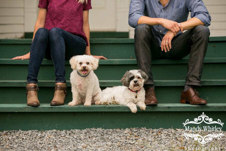 bichon frise mix dog photographer