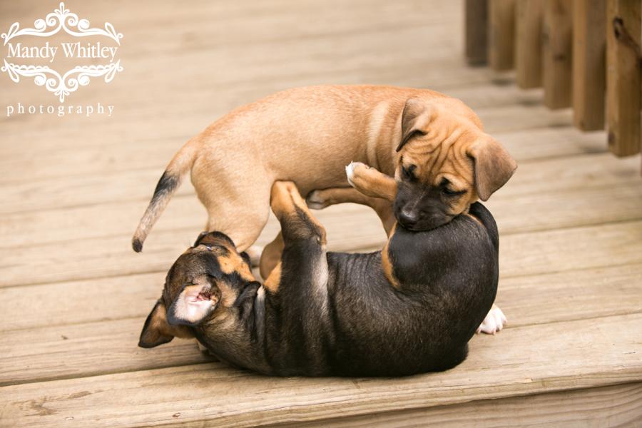 best dog photographers in nashville tn