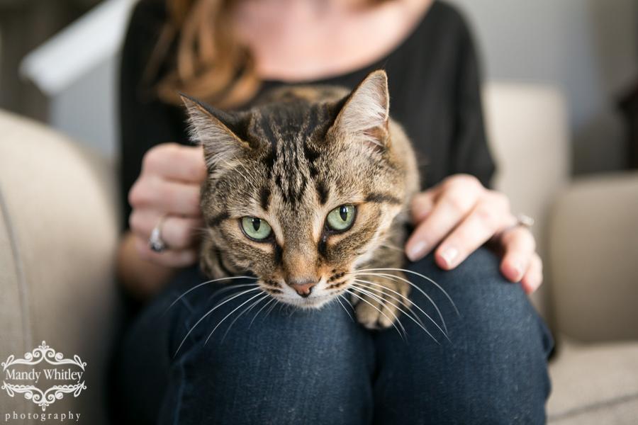 Nashville Cat Photographer