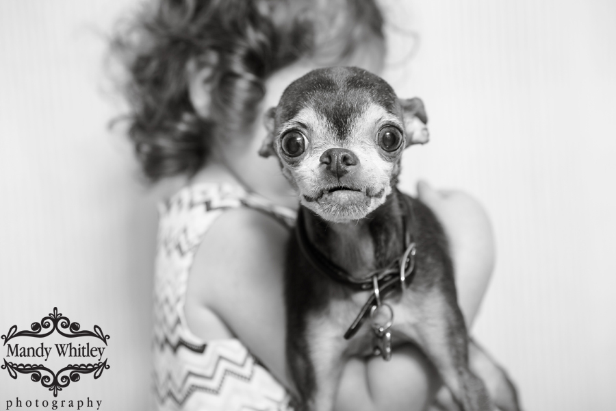 coolidge park family and pet photographer