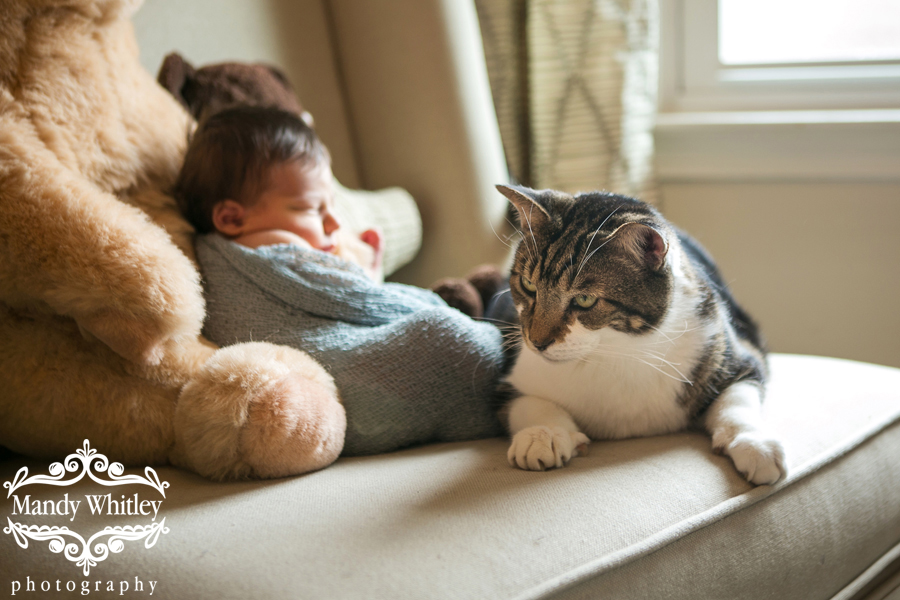 Nashville in home newborn photography with pets