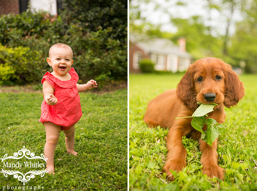 Nashville Pet Photographer
