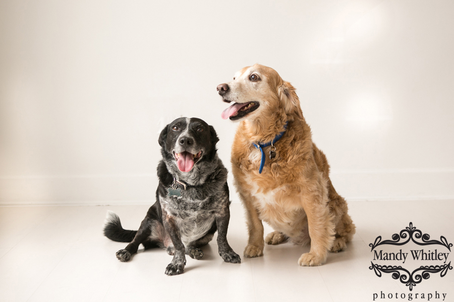 best pet photographer in nashville tn