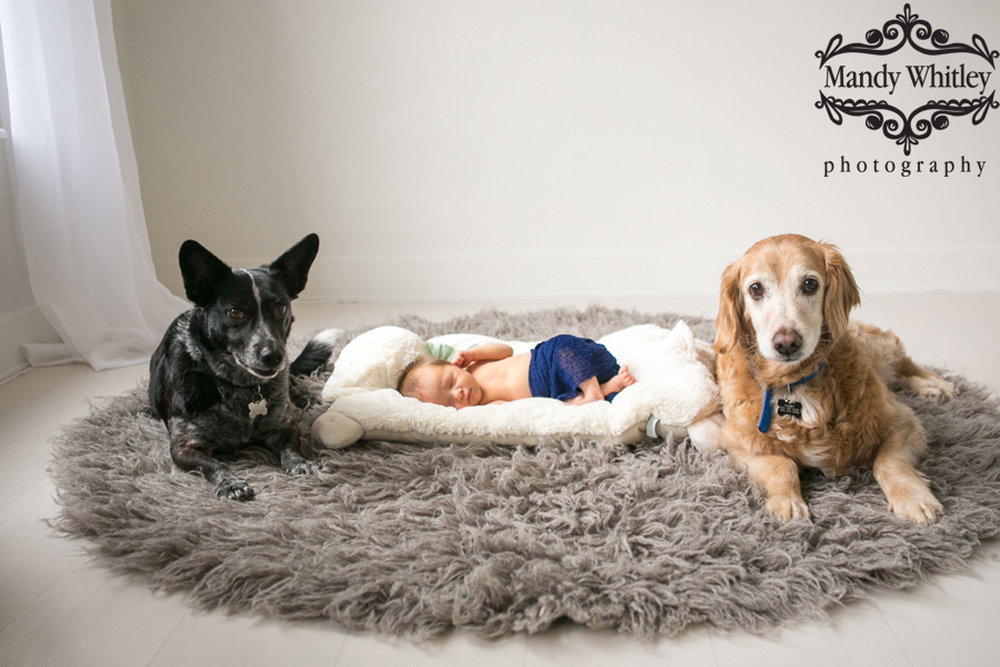 newborn photos with pets nashville tn