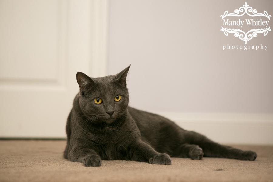 best cat photographer in nashville tn