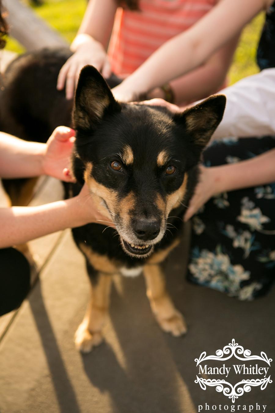 best nashville dog photographer mandy whitley