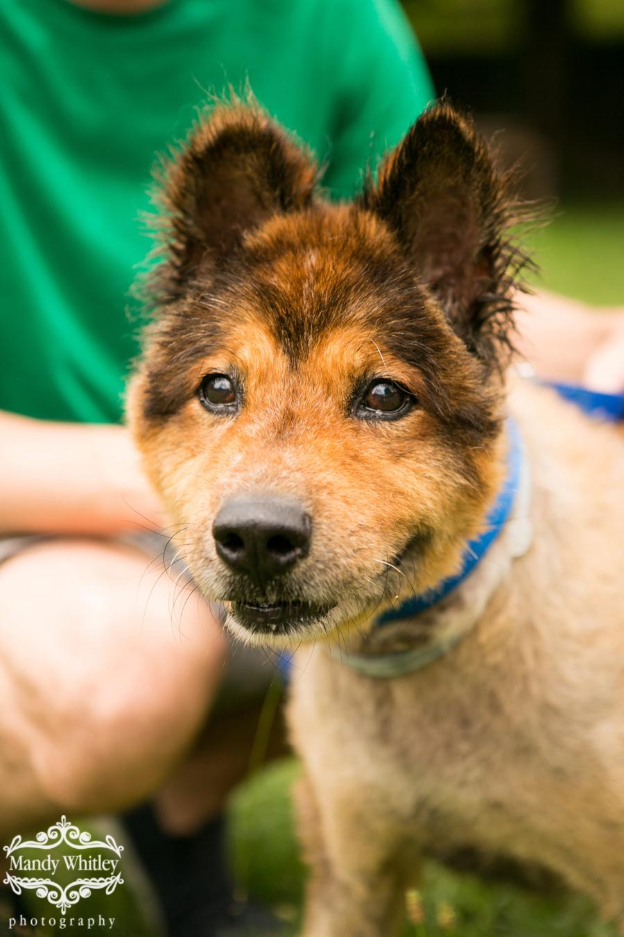dogs for adoption in nashville