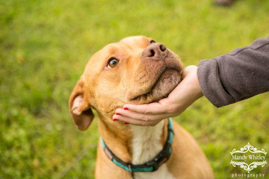 nashville dogs for adoption dog photographer
