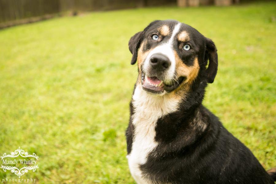 Nashville Dog Photographer East C.A.N. Adoptable Dogs