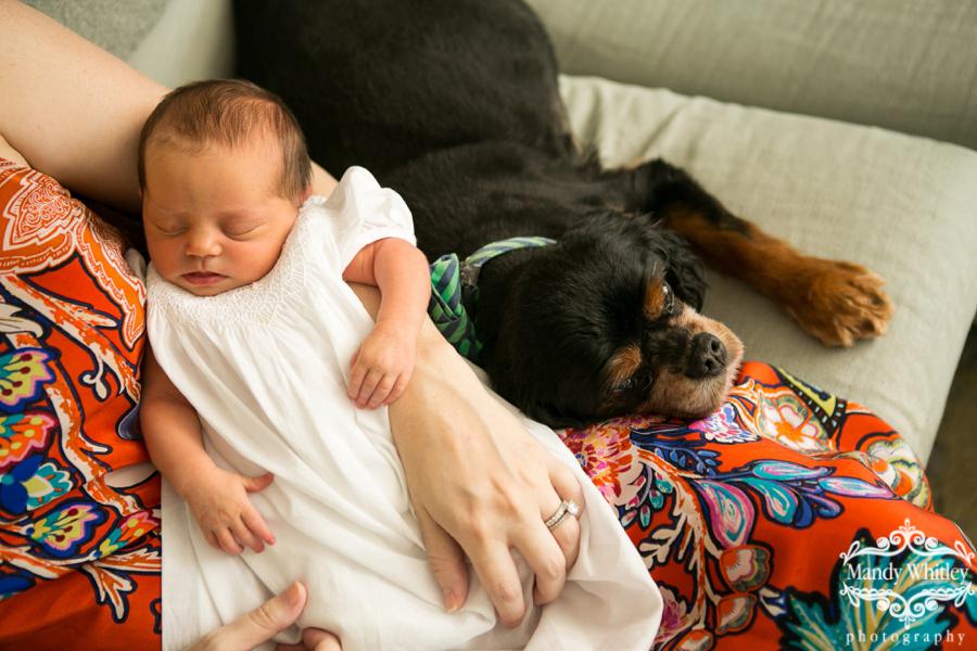 Nashville Family Newborn Pet Photographer