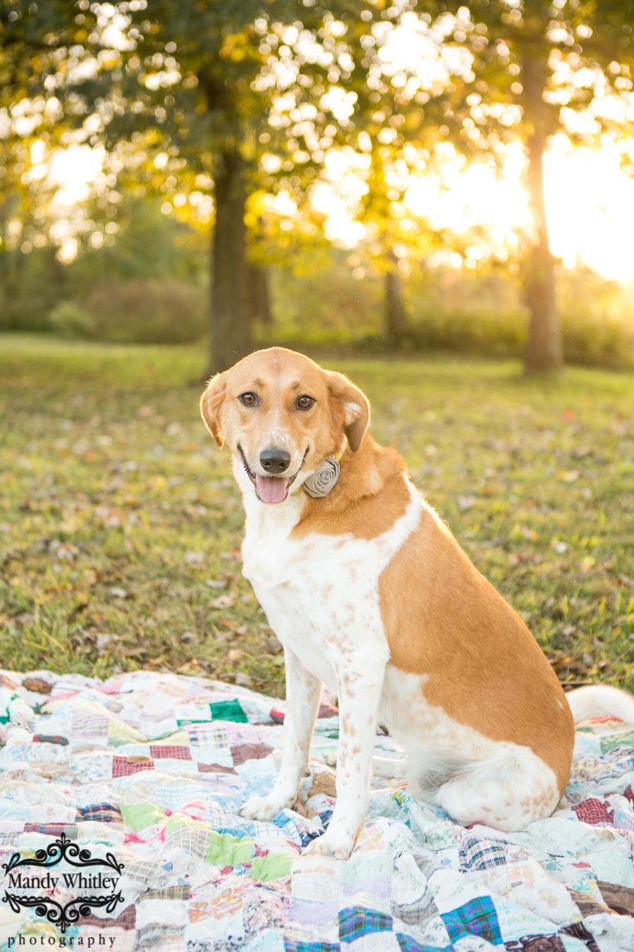 Nashville Family Pet Photographer | Mandy Whitley Photography