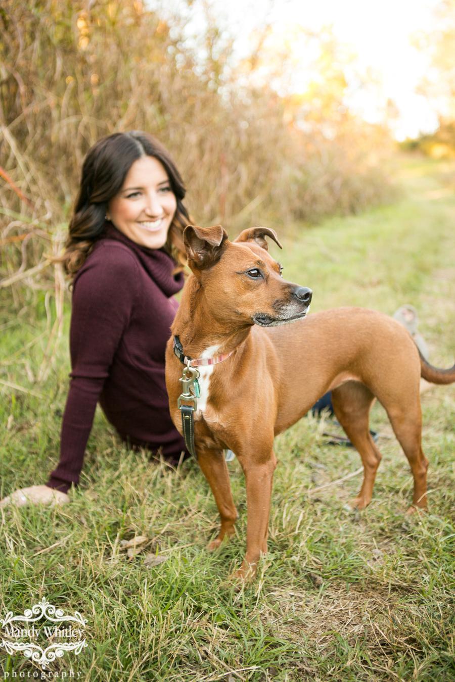 harlinsdale farm pet portraits