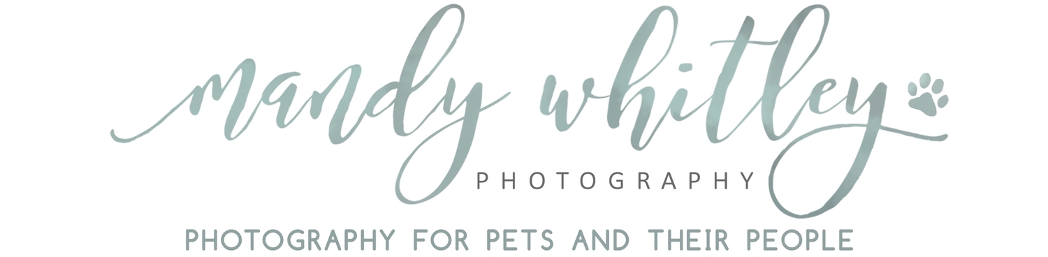 Nashville Dog Photographer | Mandy Whitley Photography