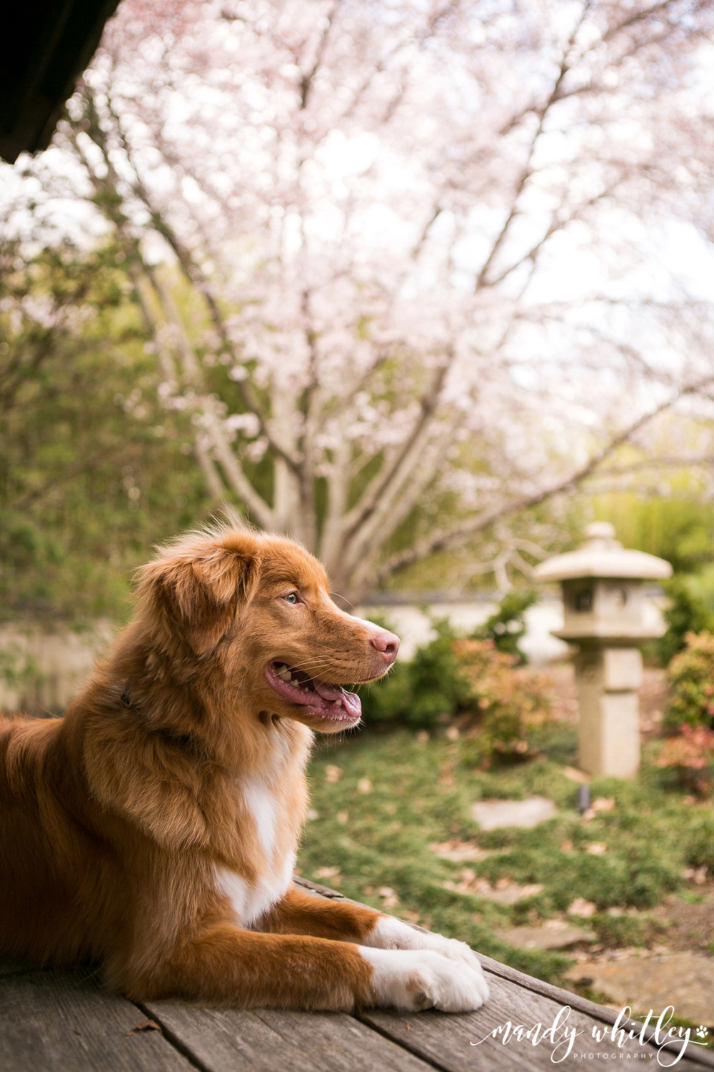 Nashville Lifestyles Cover Dog Contest | Cheekwood