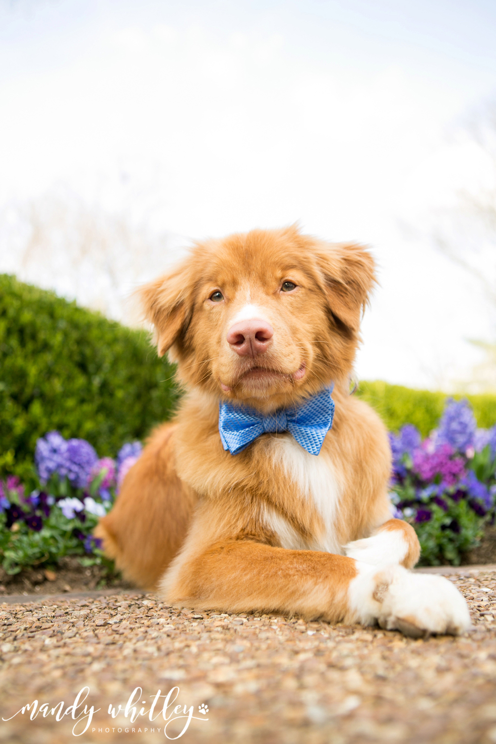 best dog photographers in nashville