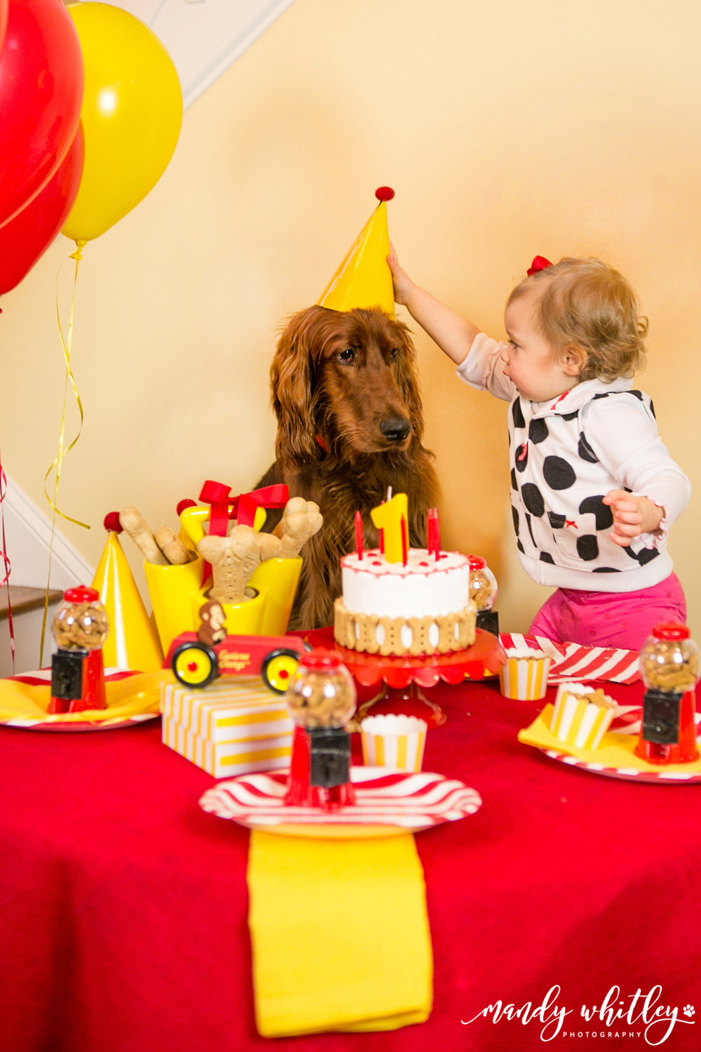 Pet Photographer In Nashville Puppy Birthday Party