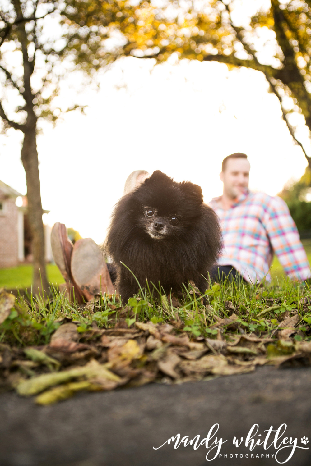Nashville Pet Photographer | Mandy Whitley Photography