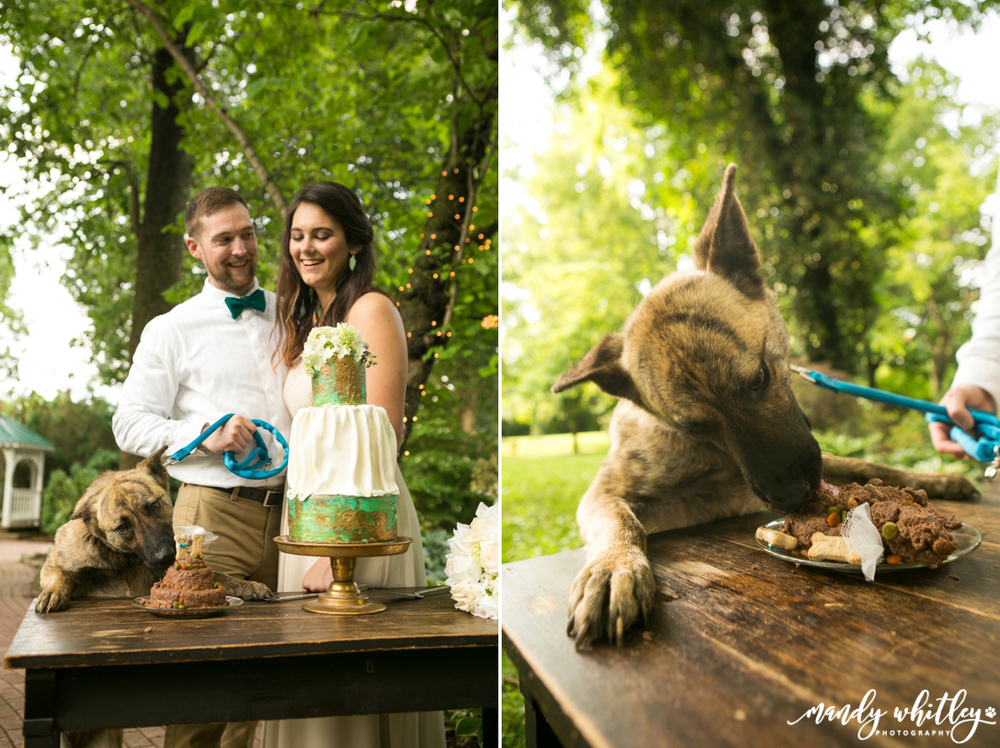Pet and Wedding Photographer at Riverwood Mansion