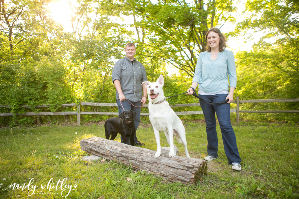 nashville dog photographer pet portraits