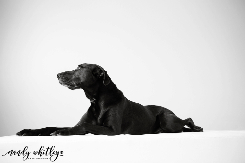 Pets and their People Nashville Pet Photography