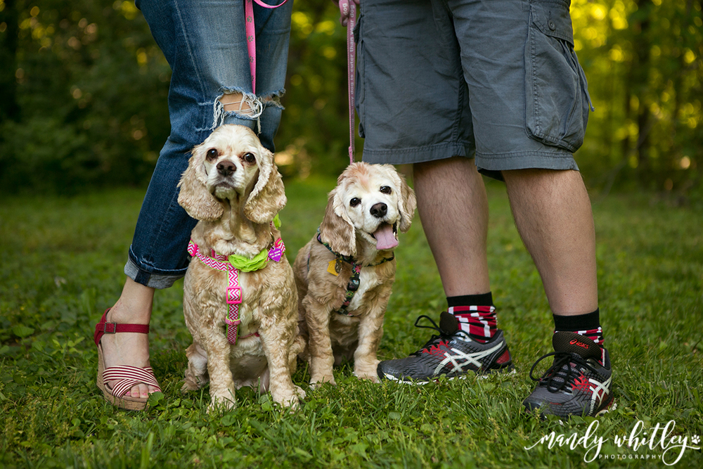 Pet Photographer in Nashville Tennessee Mandy Whitley