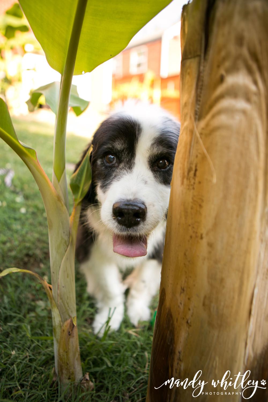 Nashville Pet Photographer Nashville Dog Photographer