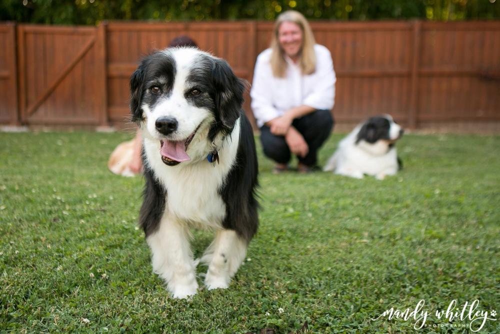 Dog Photographer in Nashville Pet Photographer