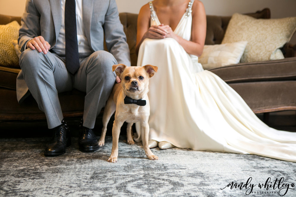 Nashville Wedding and Pet Photographer at the Cordelle Mandy Whitley Photography