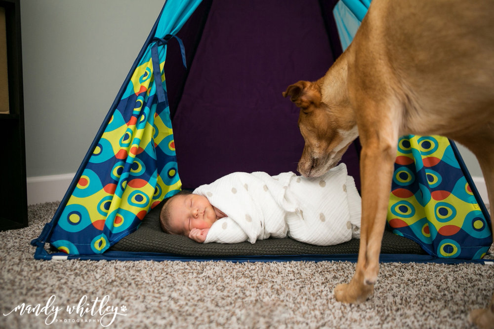 Nashville Newborn Photographer with Pets