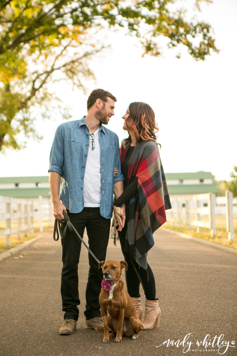 Nashville Dog Photographer at Harlinsdale Farm and Downtown Franklin