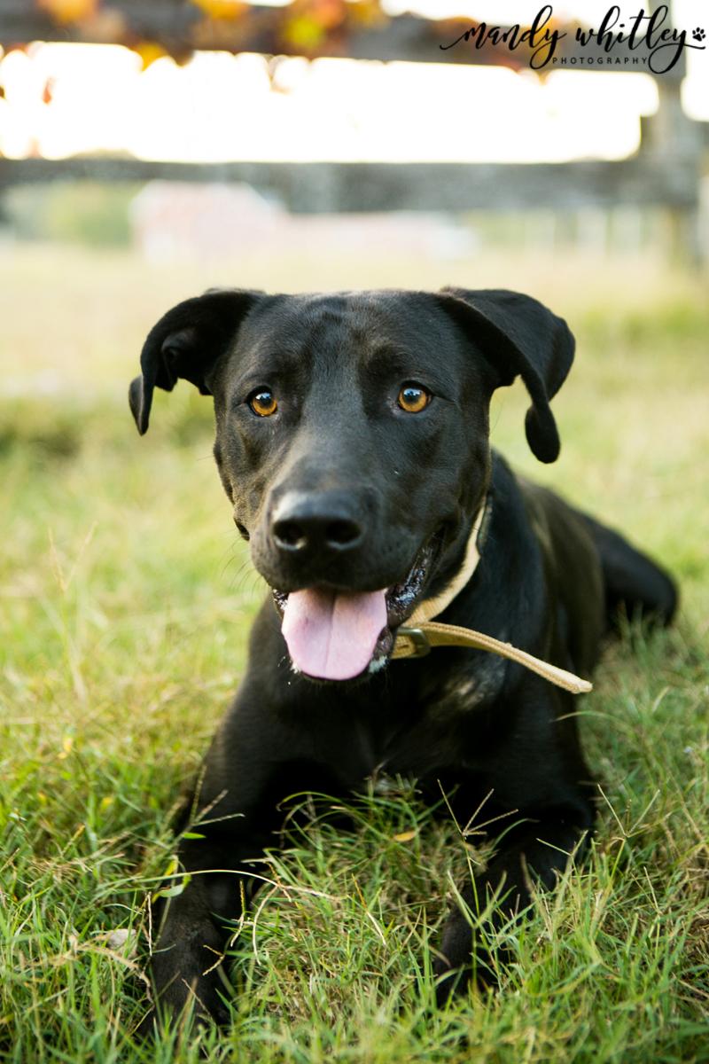 RARE Pet Charity Feature Nashville Pet Photographer