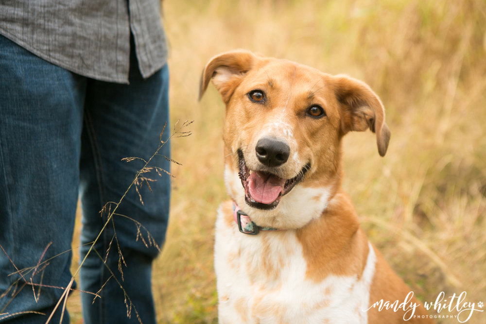 Dog Photographer in Nashville Pets