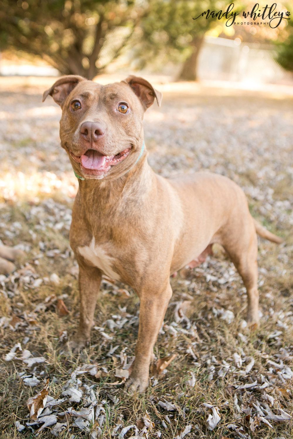 dogs for adoption in nashville