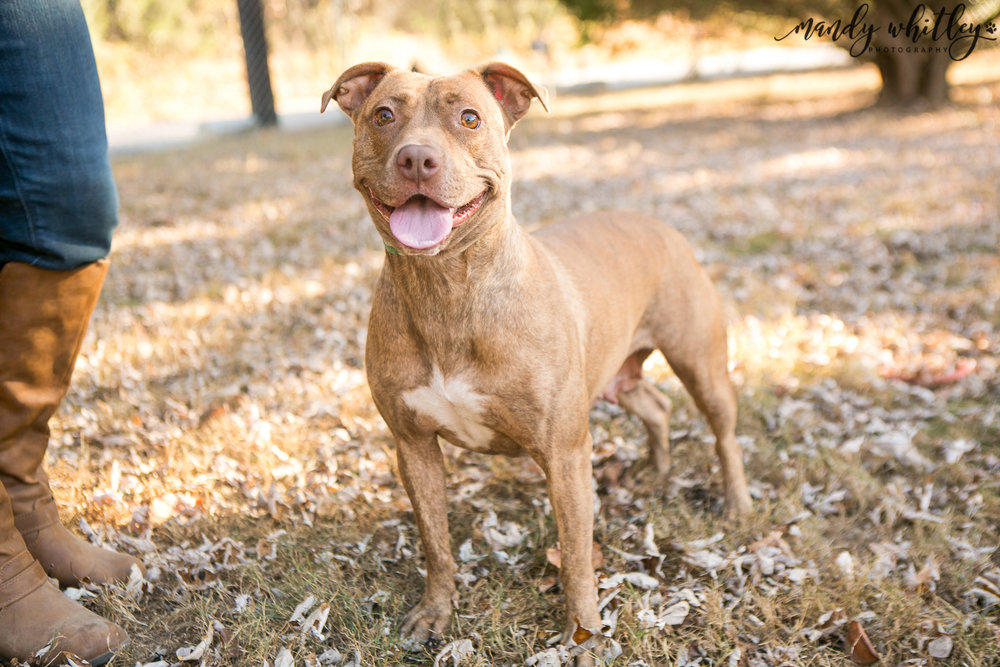 Dog Photographer in Nashville Pet Adoption