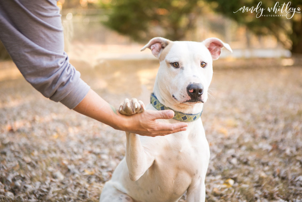 nashville dog photographer pet photographer