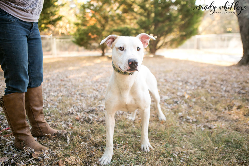 pets for adoption in nashville tn
