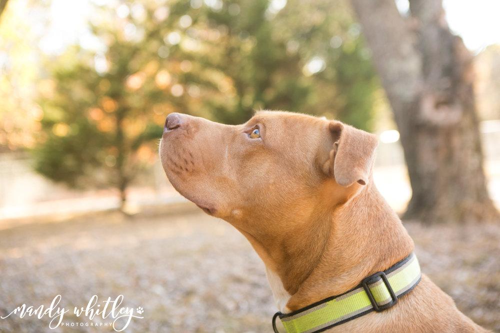 Nashville Pet Adoption Dog Photographer