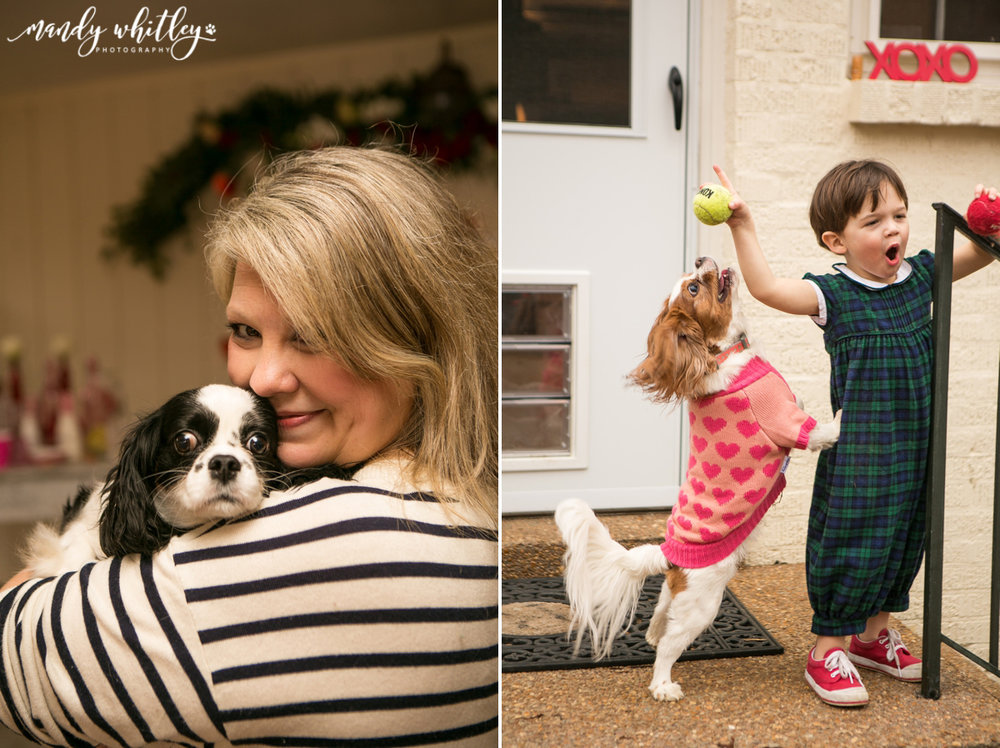 Nashville Cavalier King Charles Spaniels Valentines Pet Photographer