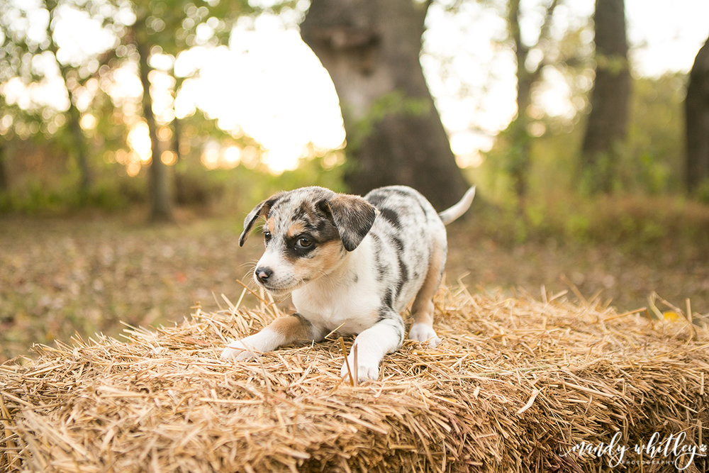 Nashville Family Photographer Pets and Their People