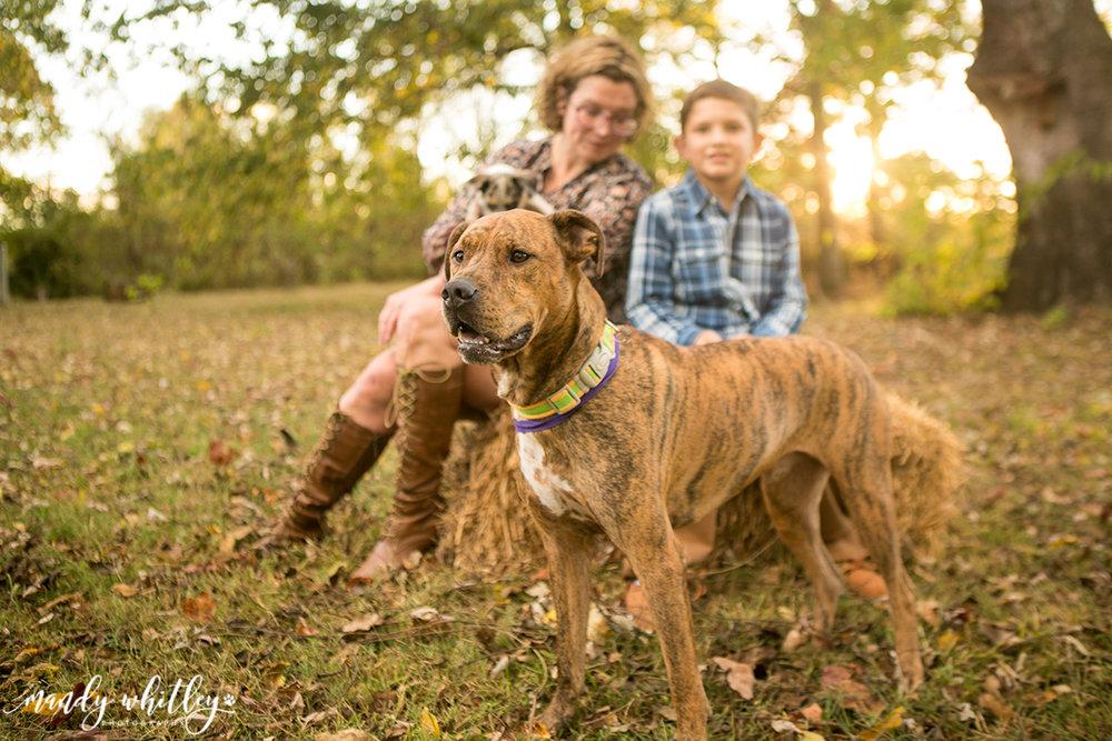 Nashville Pet Photographer Mandy Whitley
